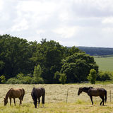 Horses in countryside Stock Photos