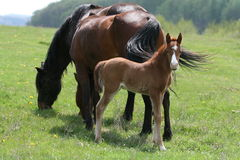Horses in countryside Stock Photo