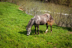 Horses in the countryside Royalty Free Stock Photos