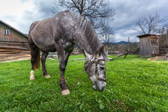 Horses in the countryside Royalty Free Stock Photo