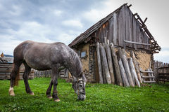 Horses in the countryside Stock Images
