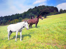 Horses in countryside field royalty free stock images
