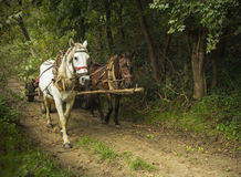 Horses on a countryside road Royalty Free Stock Image