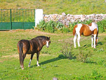 Horses on countryside Royalty Free Stock Images