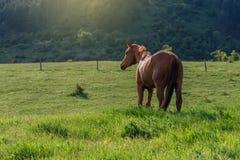 Horses on countryside on sunrise. On summer Royalty Free Stock Image