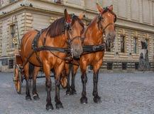 Horses couple. Stock Photo