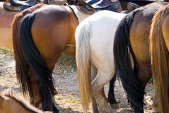 Horses croups. In a ranch Royalty Free Stock Images