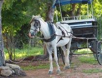 Horses Of Cuba Stock Image