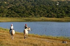 Horses and Dam Royalty Free Stock Images