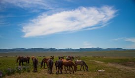 Horses in the daytime on a pasture under a beautiful sky Stock Photography