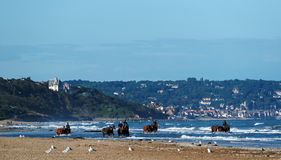 Horses at Deauville beach in Normandy Stock Images