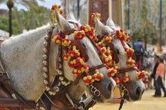 Horses decked in fair, Jerez de la Frontera Stock Photos