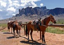 Horses in the desert Stock Photo