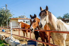 Horses of different coat colors, in the corral Stock Photography