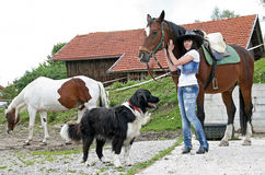 With horses and dog Stock Image