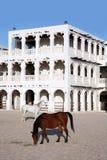Horses in doha Stock Photo
