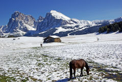 Horses on the dolomites Stock Photography