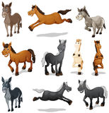 Horses and donkeys in different poses Stock Photo