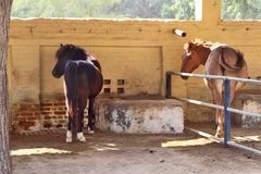 Horses/donkeys/mule at National Research Centre on Equines, Bikaner. Horses, donkeys and mule at National Research Centre on Equines, Bikaner. Main objectives of royalty free stock image