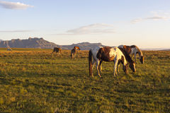 Horses in Drakensberg Royalty Free Stock Images