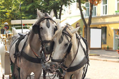 Horses drawn carriage on  city street Royalty Free Stock Photos