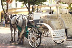 Horses drawn carriage on  city street Stock Image