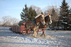 Horses-Drawn Sleigh in winter Royalty Free Stock Photography