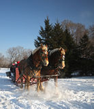 Horses-Drawn Sleigh in winter Royalty Free Stock Images