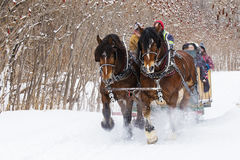 Horses-Drawn Sleigh in winter Stock Image