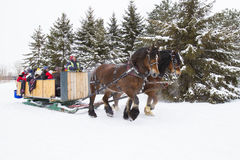 Horses-Drawn Sleigh in winter Stock Photo