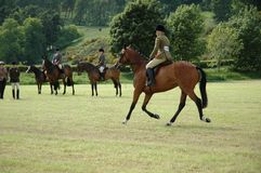 Horses at dressage tests. In the park Royalty Free Stock Photo