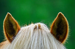 Horses ears. Brown horses hairy ears and hair Royalty Free Stock Image