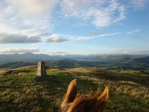 Through the Horses Ears Horse Riding in Cumbria Stock Image