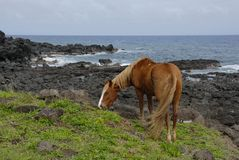 Horses of Easter island Royalty Free Stock Photography