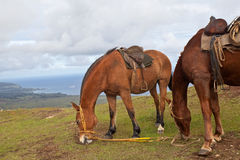 Horses on Easter Island stock images