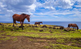 Horses on easter island cliffs Stock Photos