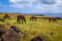 Horses on easter island cliffs Royalty Free Stock Photos