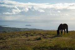 Horses in Easter Island stock photography