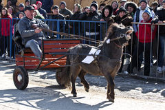 Horses Easter(Pastele Cailor) Festival Stock Photography