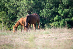 Horses. Eat grass in the field Royalty Free Stock Photos