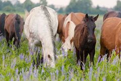 Horses eat a grass Stock Photography
