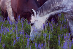 Horses eat a grass Royalty Free Stock Image