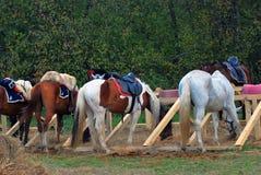 Horses eat hays Royalty Free Stock Image