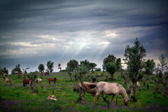 Horses Eating. Landscape with horses eating under cloudy sky Stock Photos