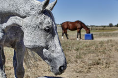 Horses eating in field Royalty Free Stock Image