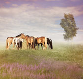 Horses Eating Hay Royalty Free Stock Image