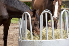 Horses eating from hay rack Royalty Free Stock Photos