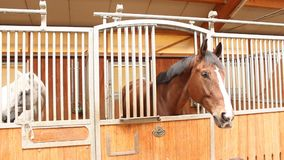 Horses endearment at stall stock video footage
