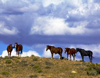 Horses Enjoy the Breeze Royalty Free Stock Images