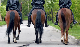 Horses with equestrians. Three horses with equestrians in a police form, the rear view Royalty Free Stock Photo
